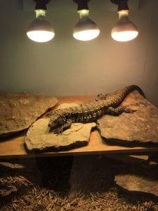 Zoo Science major succeeds, grows in Arnett Hall